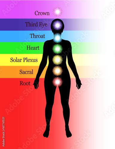 Poster Seven Major Chakras Diagram - Simple diagram showing position of seven human cha