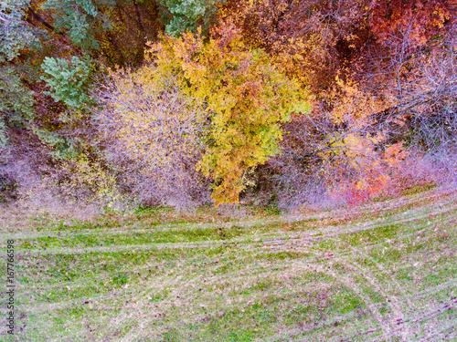 Aerial view of colorful autumn forest.