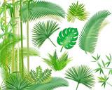 Exotischer Tropische Pflanzen illustration