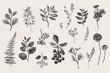 Leaves, flowers and berries set. Botanical vector vintage illustration. Set of florist. Colorful