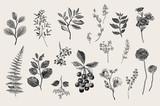 Leaves, flowers and berries set. Botanical vector vintage illustration. Set of florist. Colorful - 167787994