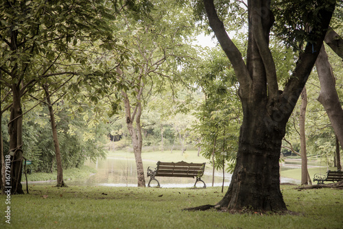 Bench near tree in public park with city scape background