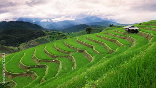 Deurstickers Rijstvelden Green terrace rice field in Chiangmai , Thailand