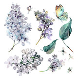 watercolor Collection of Purple Lilac. - 167826743