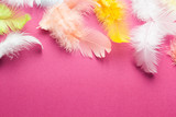 Background of many colorful beautiful and soft feathers of a bird on a pink. Space for text. - 167839172