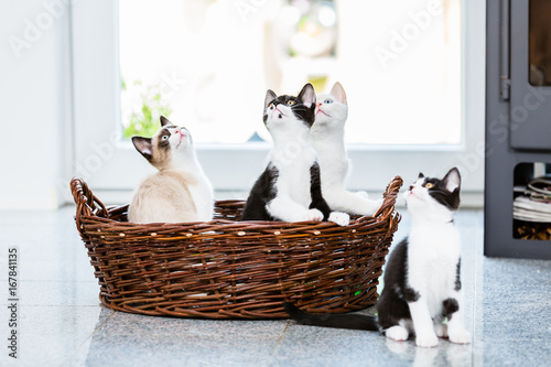Cute kittens looking up with curiosity in apartment Poster