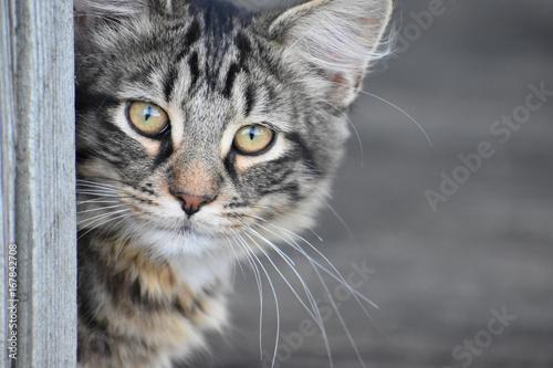 Poster Closeup of Cat