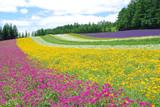 Fototapety 富良野の花畑