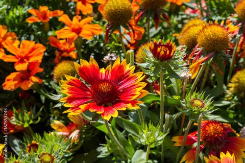 Fridge magnet trionfo di fiori
