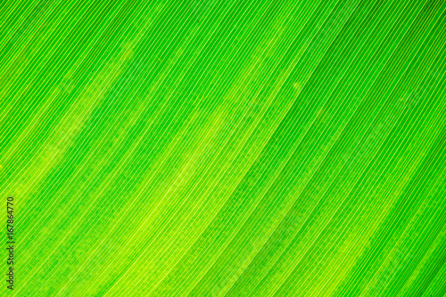 Green natural leaf texture and background - 167864770