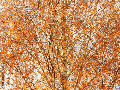 Autumn yellow leaves tree autumn backdrop