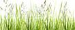Leinwandbild Motiv gräser, grashalme, wiese vor weißem hintergrund