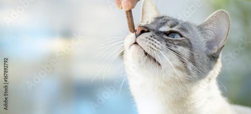 Karmić koty.