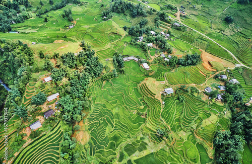 Foto op Aluminium Rijstvelden green rice fields in the mountains of vietnam
