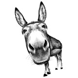 ass front view with a large head, looks black and white illustration monochrome