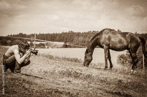 Man taking photo of brown wild horse Poster