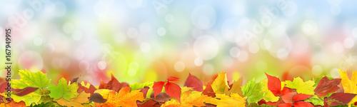 Staande foto Natuur Herbst 125