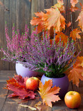 Blooming heather, colorful maple leaves and juicy fruits on a background of brown, wooden boards