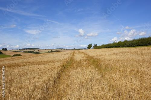 Fridge magnet golden barley fields