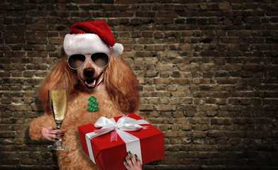 Dog in red Christmas hat with gift and champagne.
