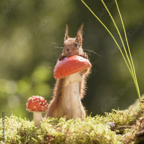 squirrel standing behind a mushroom