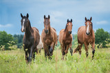 Group of young horses on the pasture in summer - 167980579