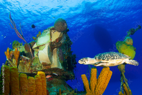 Deurstickers Schipbreuk A hawksbill turtle can be seen swimming around an underwater shipwreck in Little Cayman. The vessel is called the captain Keith Tibbetts and was a Russian destroyer based in Cuba before being sunk