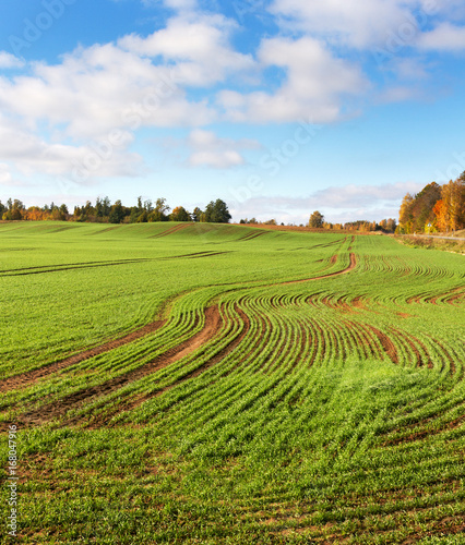 Country landscape with field.
