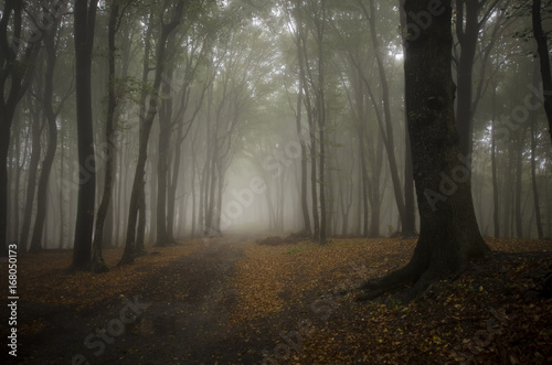 rainy weather landscape with trees in foggy forest Poster