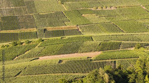 Vineyards Sun Champagne