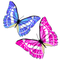 beautiful pink and blue butterflies, isolated  on a white