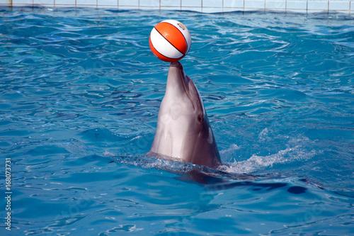 Fotobehang Dolfijn attrazione con i delfini