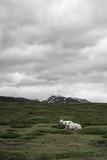 Road trip in the Lyngen Alps, Tromsø region, Norway - 168081718