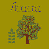 flat illustration stylish background plant Acacia