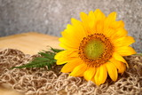 Beautiful sunflower and leaf of the fern