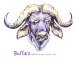 Watercolor formidable bull on the white background. African animal. Wildlife art illustration. Can be printed on T-shirts, bags, posters, invitations, cards, phone cases, pillows. - 168112141