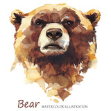 Watercolor bear on the white background. Forest animal. Wildlife art illustration. Can be printed on T-shirts, bags, posters, invitations, cards, phone cases, pillows. - 168112187