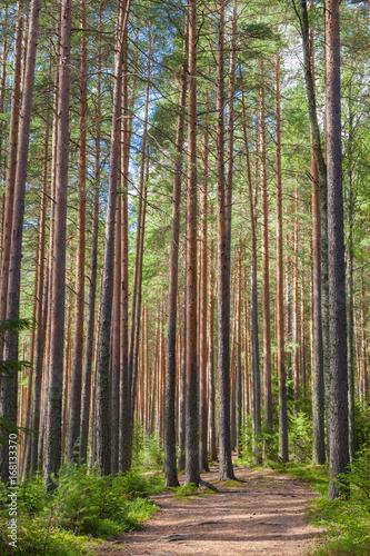 Fotobehang Weg in bos Walking path in forest at summer day