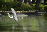 Heron in wildlife - 168166323