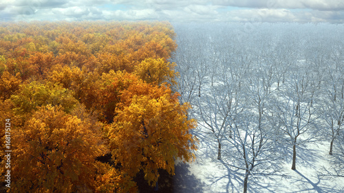 autumn to winter forest