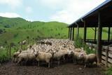Farm life New Zealand - 168185716