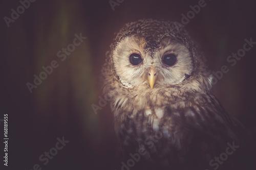 owl - 168189555