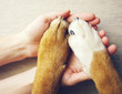 Dog paws and human hand close up, top view. Conceptual image of friendship, trust, love, help between the person and a dog