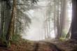 Foggy Forest of Bolinas Ridge. Point Reyes National Seashore, Marin County, California, USA.