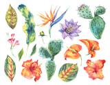 Watercolor set of vintage floral tropical natural elements - 168239720
