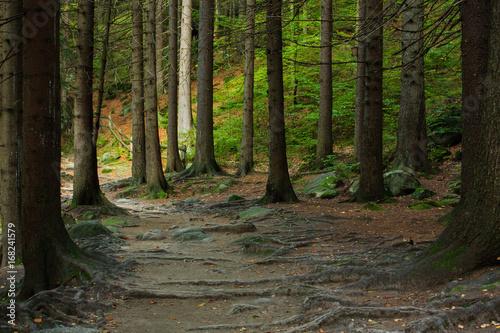 Fotobehang Weg in bos Szlak turystyczny, Karkonosze