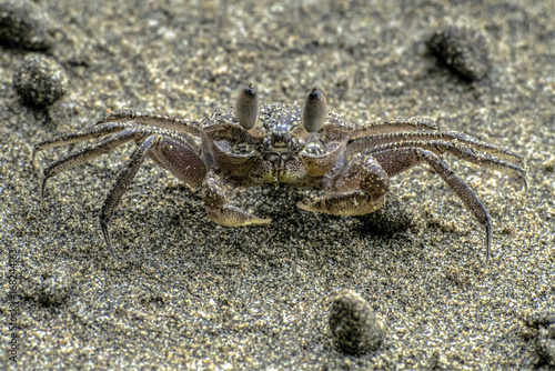 Crab on the beach Poster