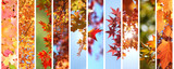 Colorful autumn leaves set - 168258326