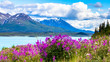 Wildflowers in the Yukon