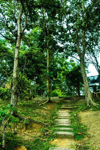 Foot walk between green tree in jungle